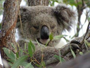 Every Purchase Helps Australian Wildlife